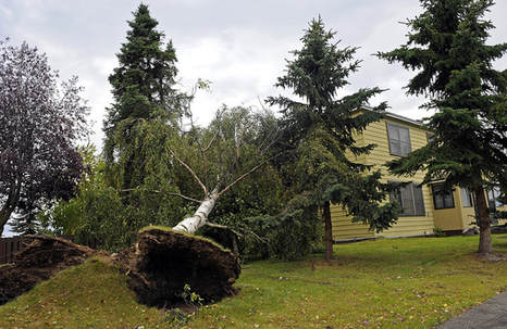 Storm Damage in Geneva