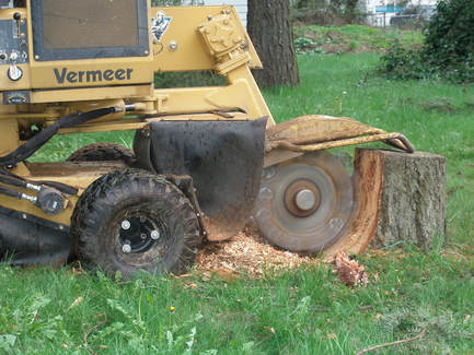 Stump Grinding Winston Salem