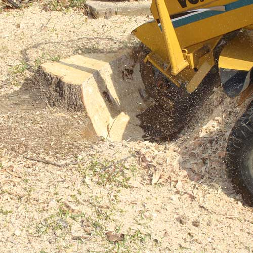 Winston-Salem Stump Grinding
