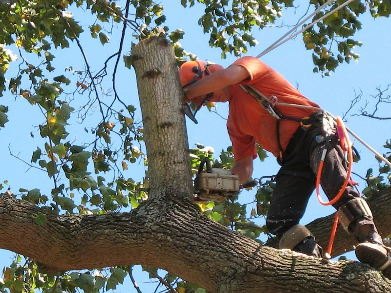 Tree Removal Winston-Salem NC